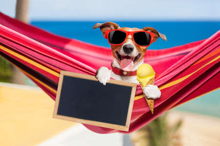 jack russell dog relaxing on a fancy red  hammock  with blank banner, placard or blackboard,  on summer vacation holidays at the beach licking ice cream on a waffle Stock Photo
