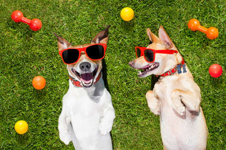 playful behaviour: couple of dogs funny  and laughing on grass or meadow in park  with  pet toys all over  ,  on summer vacation holidays