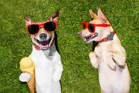 couple of dogs relaxing on grass or meadow in park  with  cold vanilla ice cream ,  on summer vacation holidays