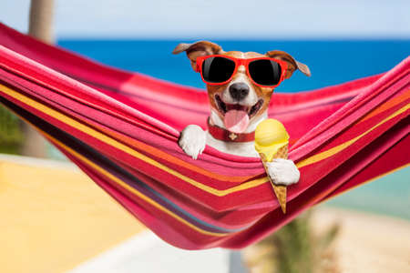 jack russell dog relaxing on a fancy red  hammock  or lounger  with  cold vanilla ice cream ,  on summer vacation holidays at the beach Stock Photo