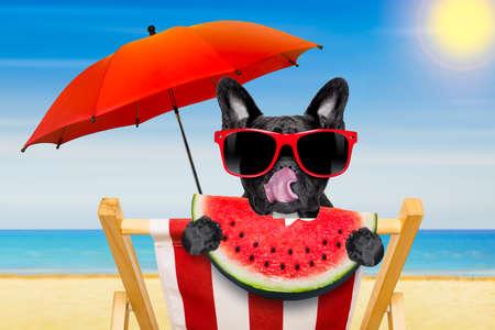 Französisch Bulldog Hund auf einem ansprechenden roten Hängematte mit roten Sonnenbrille entspannenden, in den Sommerferien Urlaub am Strand, eine frische saftige Wassermelone essen