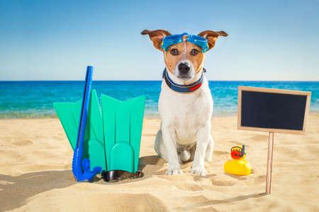 picada: jack de buceo snorkel perro Russell máscara con el tubo respirador en la playa en las vacaciones de vacaciones de verano