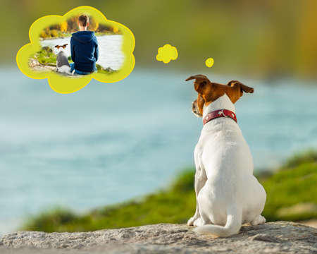 jack russell dog missing and thinking about the past with owner , outdoors by the river in a speech bubble