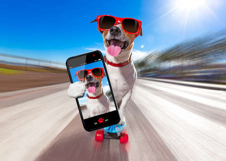 fashion: jack russell terrier dog  riding a skateboard as a skater , with sunglasses in summer vacation close to the beach, taking a selfie with smartphone Stock Photo