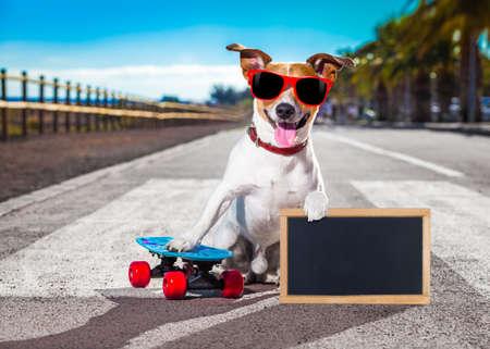 잭 러셀 테리어 강아지 스케이트 보드 여름 휴가 선글라스와 스케이트 보드를 타고 배너 또는 플래 카드를 들고 해변 가까이