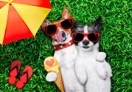 love very: couple of dogs in love very close together lying on grass under the umbrella at the park eating ice cream and hugging or embracing