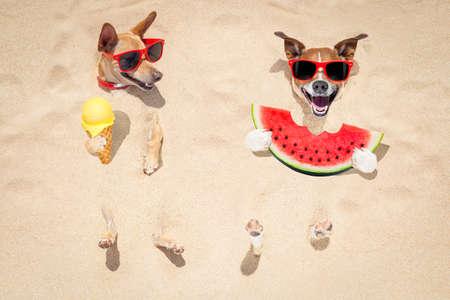 Grappige paar honden begraven in het zand op het strand op zomervakantievakantie, met rode zonnebril, een verse sappige watermeloen en ijsje op de kegelwafel