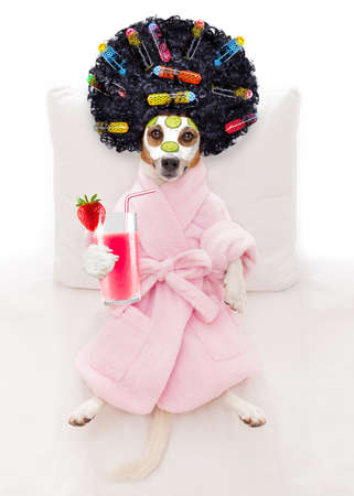 jack russell dog relaxing  and lying, in   spa wellness center ,getting a facial treatment with  moisturizing cream mask and cucumber, drinking a cocktail milkshake smoothie Stock Photo