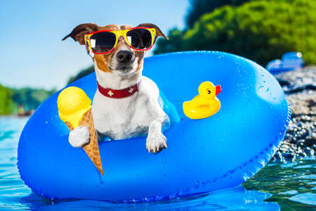 Hund auf blauem Luftmatratze im Wasser erfrischend auf Sommerferien Urlaub am Strand oder Fluss, Eis in Kegel Waffel essen
