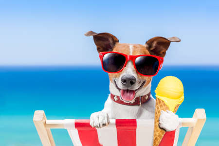 jack russell dog  on hammock at the beach relaxing  on summer vacation holidays,  eating a fresh lemon or vanilla ice cream on a cone waffle Archivio Fotografico
