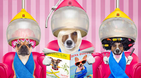 groomer: couple of dogs at the groomer or hairdresser, under  drying hood,reading newspaper sitting on red chairs