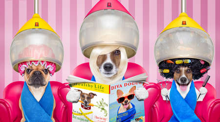 hair stylist: couple of dogs at the groomer or hairdresser, under  drying hood,reading newspaper sitting on red chairs