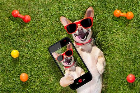 feliz perro chihuahua terrier en parque o prado de espera y, mirando al propietario para jugar y divertirse juntos, teniendo una autofoto Foto de archivo