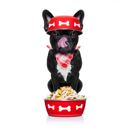 hungry  french bulldog  dog holding food bowl and licking with tongue, behind food,  isolated on white background