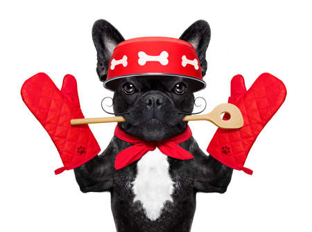 work: french bulldog dog chef cook  wearing cook or kitchen gloves, isolated on white background Stock Photo
