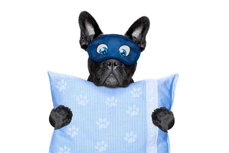 agotado: francés bulldog descansando, durmiendo o que tienen una siesta con el reloj de alarma y máscara para los ojos, sosteniendo una almohada, aislado en fondo blanco Foto de archivo