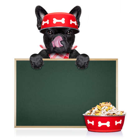 hungry  french bulldog  dog holding food bowl and licking with tongue, behind banner or placard, isolated on white background Stock Photo