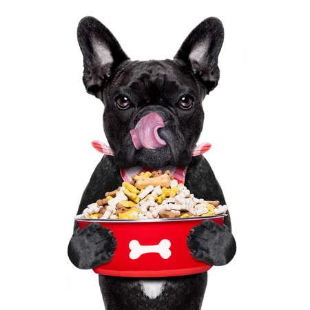 paciencia: hambriento perro bulldog francés que sostiene el plato de comida y lamer con la lengua, aislado en fondo blanco