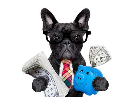 baas accountant rijke Franse bulldog besparen dollars en geld met spaarvarken of spaarpot, met een bril en stropdas, geïsoleerd op een witte achtergrond