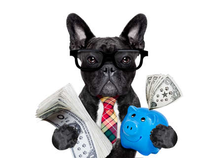 boss accountant rich french bulldog saving dollars and money with piggy bank or moneybox , with glasses and tie , isolated on white background Archivio Fotografico