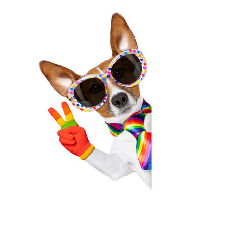 freedom: crazy funny gay dog proud of human rights , with rainbow flag and sunglasses, isolated on white background, behind blank banner or placard Stock Photo