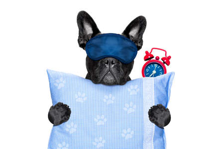 francés bulldog descansando, durmiendo o que tienen una siesta con el reloj de alarma y máscara para los ojos, sosteniendo una almohada, aislado en fondo blanco