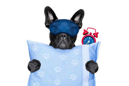 French bulldog cane a riposo, dormire o avere una siesta con sveglia e maschera per gli occhi, in possesso di un cuscino, isolato su sfondo bianco Archivio Fotografico - 60841516