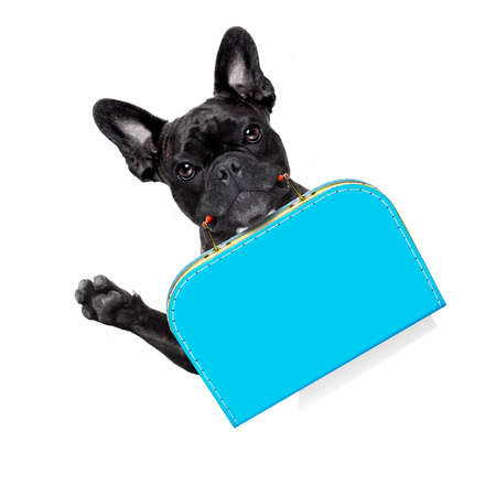 french bulldog dog abandoned and left all alone on the road or street, with luggage bag  , begging to come home to owners, isolated on white background Stock Photo
