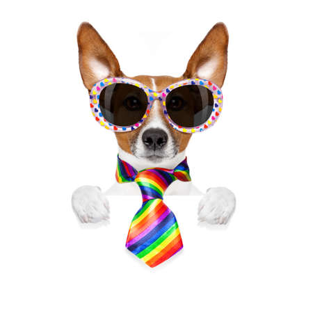 crazy funny gay dog proud of human rights , with rainbow flag and sunglasses, isolated on white background, behind blank banner or placard Stock Photo