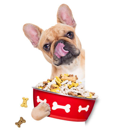 doggies: hungry  french bulldog  dog holding food bowl and licking with tongue, isolated on white background