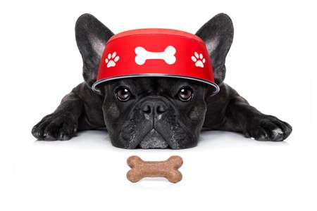 paciencia: hambriento perro bulldog francés con el plato de comida en la planta baja, aislado en fondo blanco Foto de archivo