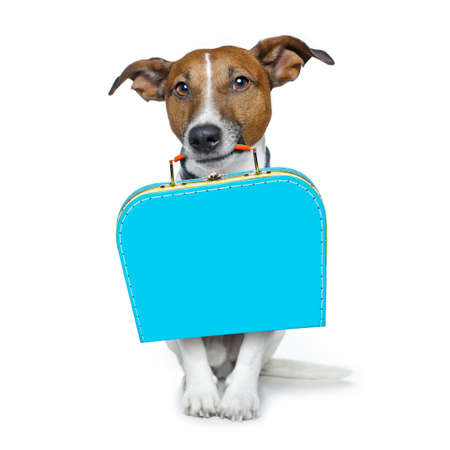 street love: jack russell dog abandoned and left all alone on the road or street, with luggage bag  , begging to come home to owners, isolated on white background Stock Photo