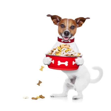 Hongerige jack russell hond houden voedsel kom en likken met tong, geïsoleerd op een witte achtergrond