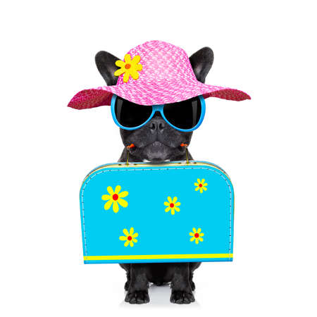 french bulldog dog  with luggage bag  , ready for summer vacation holidays, isolated on white background