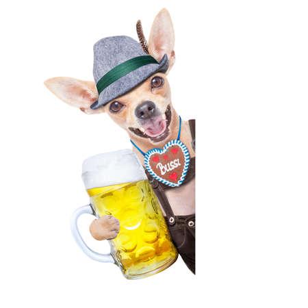 octoberfest: bávaro alemán perro chihuahua con el pan de jengibre y la cerveza taza, aislado en fondo blanco, listo para la celebración del festival de la cerveza en Munich