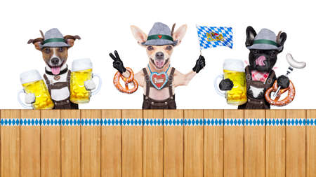 lederhose: bavarian german row or group  of dogs with  pretzel, beer mug ,flag , sausage,  and gingerbread heart, isolated on white background , ready for the beer celebration festival in munich