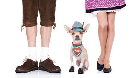 cup: bavarian german chihuahua  dog with  bag and luggage, with owner , isolated on white background , ready for the beer celebration festival in munich Stock Photo