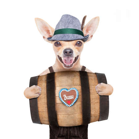 traditional: bavarian german chihuahua dog with  gingerbread and hat, behind barrel,  isolated on white background , ready for the beer celebration festival in munich