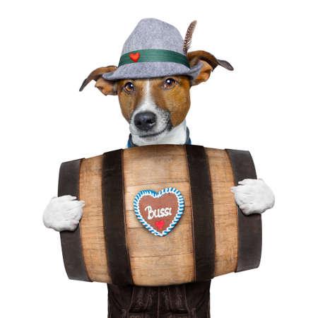 octoberfest: bávaro jack russell perro alemán con pan de jengibre y sombrero, detrás de barril, aislado en fondo blanco, listo para la celebración del festival de la cerveza en Munich