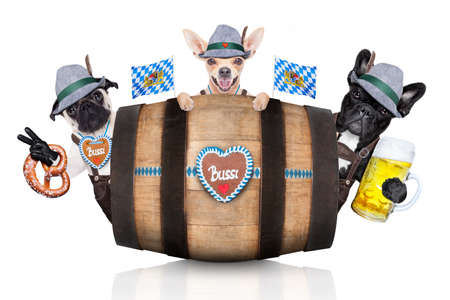 beerfest: group or team of bavarian german dogs  with  gingerbread and hat, behind barrel,  isolated on white background , ready for the beer celebration festival in munich Stock Photo