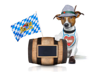 funny glasses: bavarian german jack russell dog with  gingerbread and hat, behind barrel,  isolated on white background , ready for the beer celebration festival in munich Stock Photo