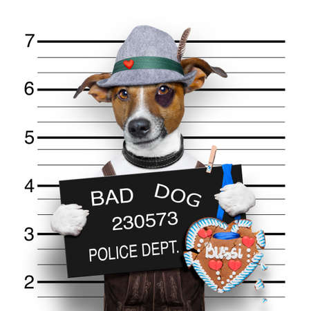 bavarian german jack russell dog with  gingerbread and hat, mugshot at police station