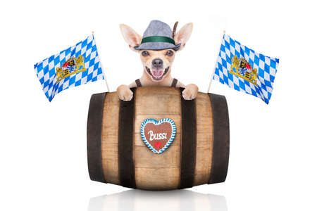 wiesn: bavarian german chihuahua dog with  gingerbread and hat, behind barrel,  isolated on white background , ready for the beer celebration festival in munich