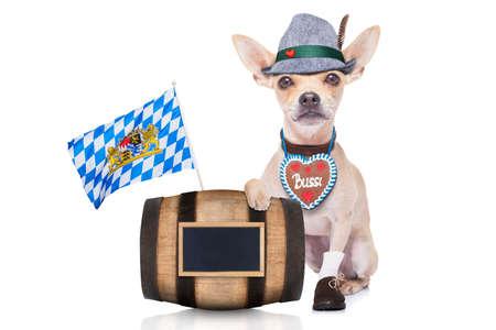 octoberfest: bávaro alemán perro chihuahua con el pan de jengibre y sombrero, detrás de barril, aislado en fondo blanco, listo para la celebración del festival de la cerveza en Munich Foto de archivo