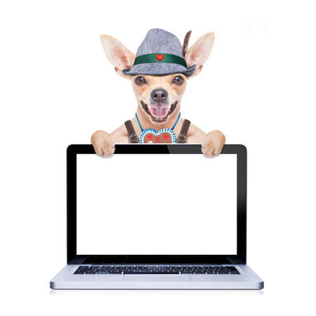 lederhose: bavarian german chihuahua dog with  gingerbread and hat,laptop pc screen computer display,  isolated on white background , ready for the beer celebration festival in munich
