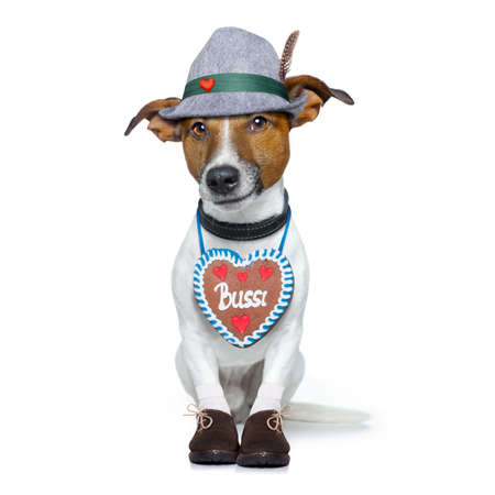 beerfest: bavarian german jack russell dog with  gingerbread and hat, isolated on white background , ready for the beer celebration festival in munich