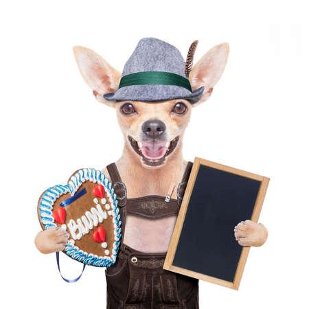octoberfest: bávaro alemán perro chihuahua con el pan de jengibre y sombrero, con la pizarra o banner de cartel, aislado en fondo blanco, listo para la celebración del festival de la cerveza en Munich Foto de archivo