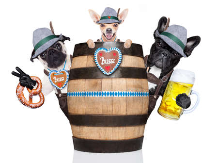group or team of bavarian german dogs  with  gingerbread and hat, behind barrel,  isolated on white background , ready for the beer celebration festival in munich Stock Photo