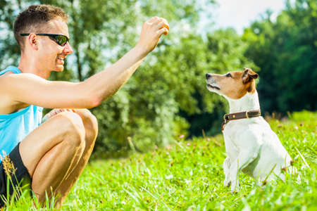 agility people: jack russell dog with owner with food treat in hand ,  training outside and outdoors at the park or meadow Stock Photo