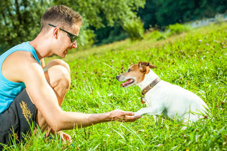 jack russell dog with owner with high five paw and training outside and outdoors at the park or meadow